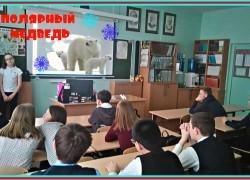 Медведи и киты